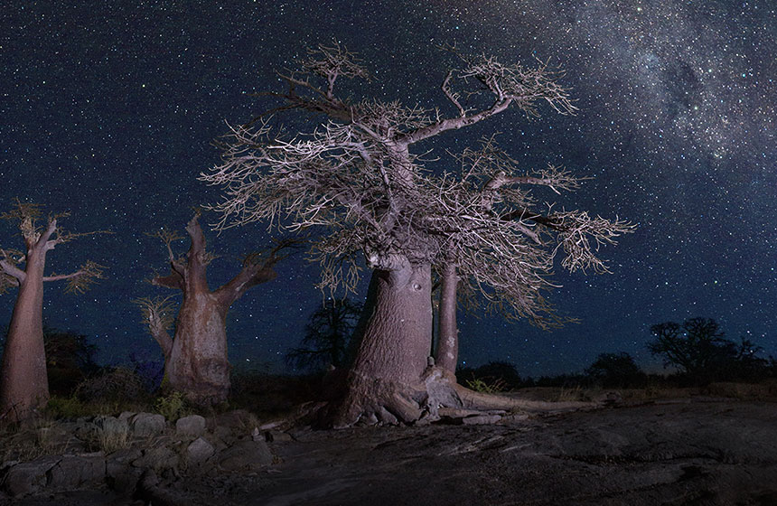 Starlit Skies at night, Botswana