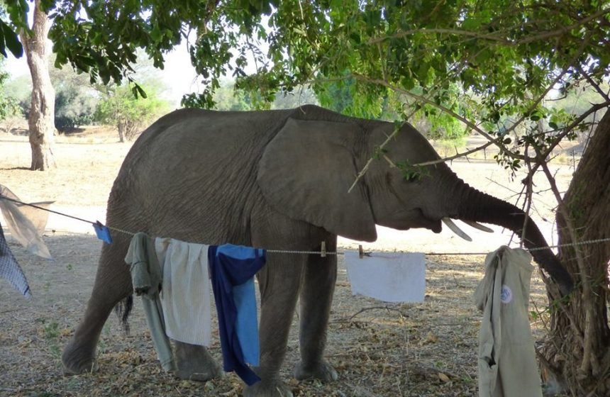 Baby elephant discovers our clothing line.