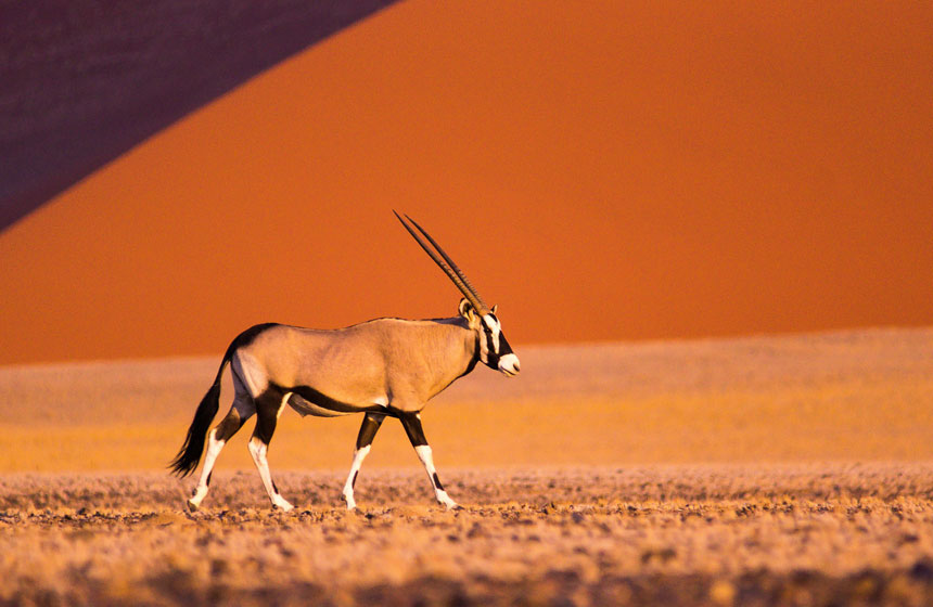 Antelope in the Sun, Namibia tours, Escape to Africa Safaris