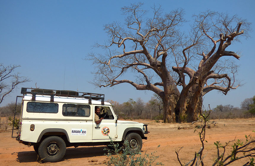 Out on a safari, Painted dog conservation, Escape to Africa tours