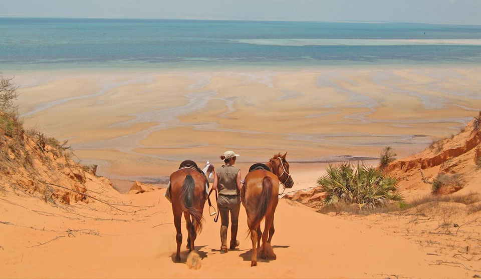 Bringing the horses to the Beach, Mozambique