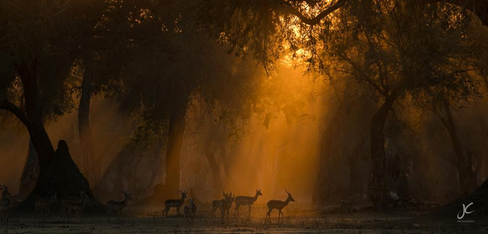 Antelopes in the sunlight