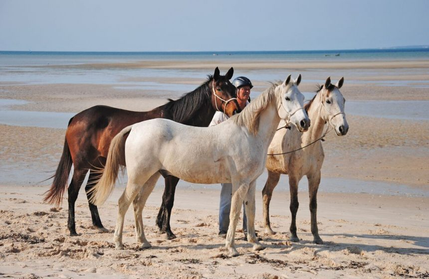 Horse safari along the Indian Ocean...