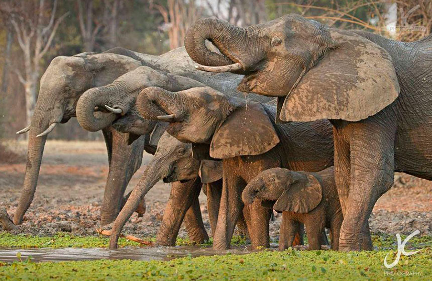 A family of elephants seen during a safari